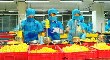 đơn hàng chế biến rau củ tại nhât