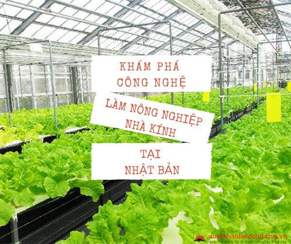 công nghệ làm nông nghiệp trong nhà kính tại Nhật Bản