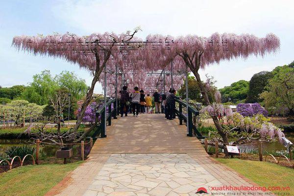lễ hội hoa tử đằng ở công viên ashikaga