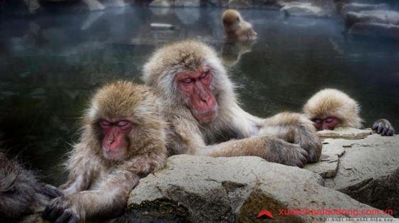 Công viên khỉ Jigoku Dani