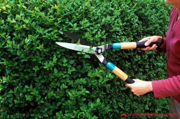 Tuyển 15 Nam làm cắt tỉa cây cảnh tại Saitama, Nhật Bản