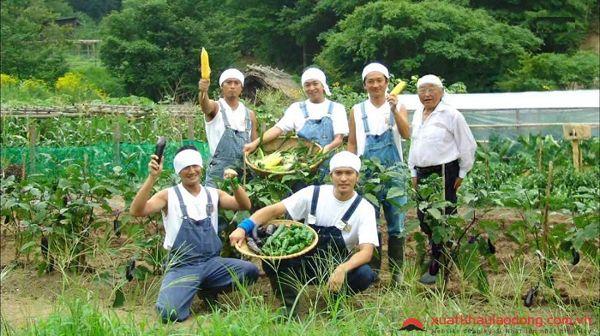 Nông nghiệp Nhật Bản không sức trẻ - Cơ hội lớn cho lao động Việt