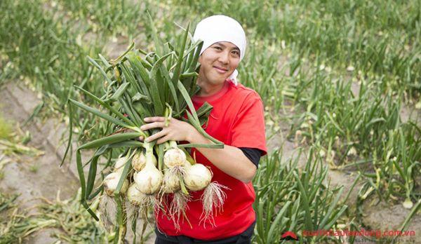 Cần GẤP 30 Nam/nữ trồng hành tại Hokkaido, Nhật Bản