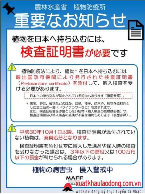 Đi tù như chơi nếu MANG NHỮNG THỨ NÀY nhập cảnh Nhật Bản từ tháng 06/2019