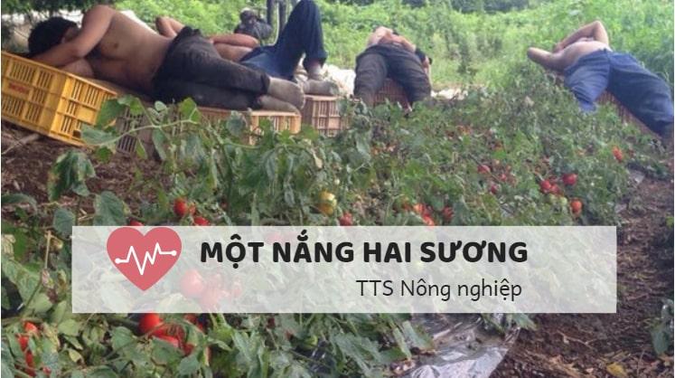 """Thấm dần 4 chữ """"Một nắng hai sương"""" – TTS nông nghiệp"""