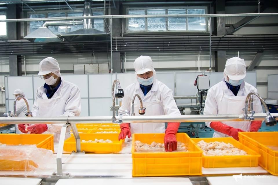 Tỉnh Tottori - vùng đất vàng thu hút lao động Việt