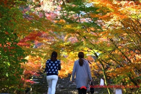 Đi XKLĐ tại tỉnh Kochi Nhật Bản HÃY CHỌN  đơn thủy sản, nông nghiệp!