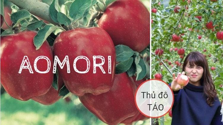 Tỉnh Aomori Nhật Bản – thủ đô của táo