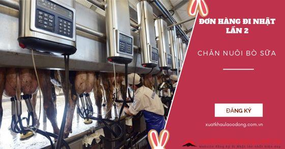 Tuyển 15 Nam/nữ chăn nuôi bò sữa đi lại lần 2 tại Hokkaido, Nhật Bản