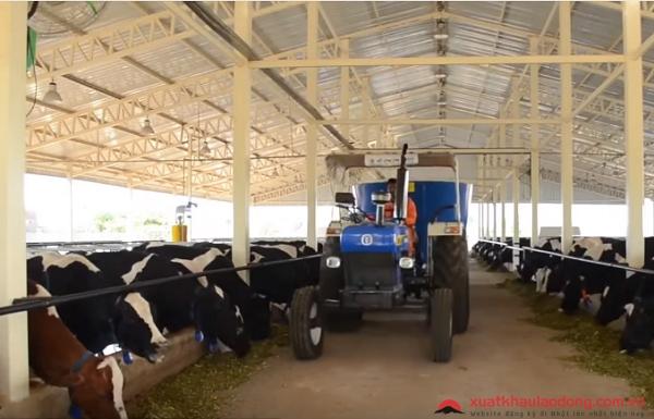 đơn hàng chăn nuôi bò sữa lần 2