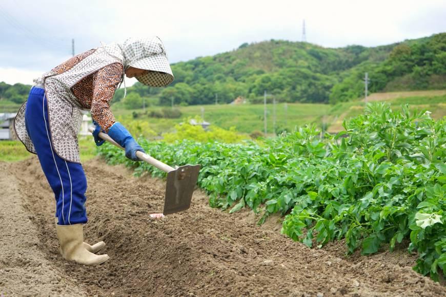 21 TTS nông nghiệp BỊ ĐUỔI VỀ NƯỚC vì công ty vi phạm Luật an ninh lao động!
