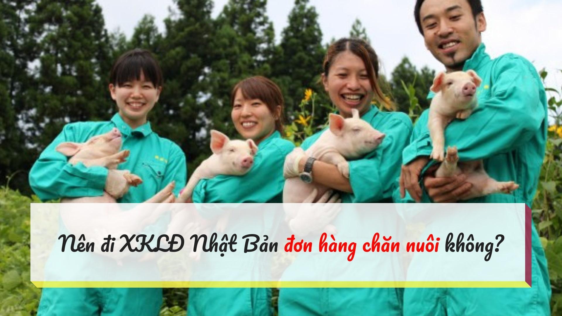 Nên đi XKLĐ Nhật đơn hàng chăn nuôi không? Công việc cụ thể là gì?