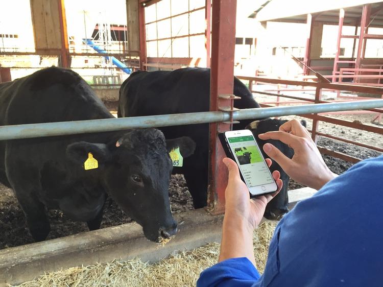 đơn hàng 15 nam sản xuất bìa cát tôĐơn hàng chăn nuôi bò sữa tại Hokkaido sữa LƯƠNG SIÊU CAO, tuyển gấp 01/2020ng lương 165,440 yên/tháng tại Hyogo