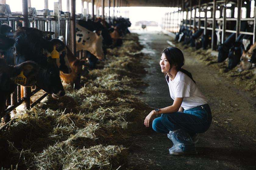 Đơn hàng chăn nuôi bò sữa tại Hokkaido sữa LƯƠNG SIÊU CAO, tuyển gấp 05/2021