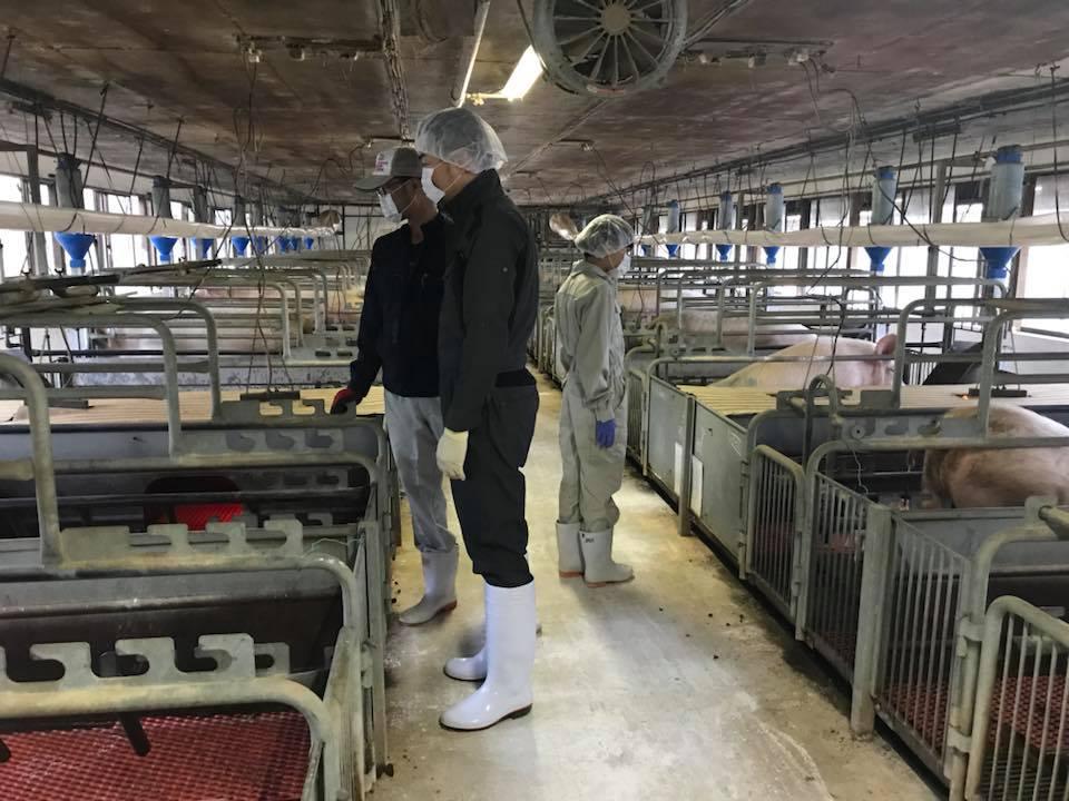 đơn hàng chăn nuôi lợn tại Tochigi, Nhật Bản