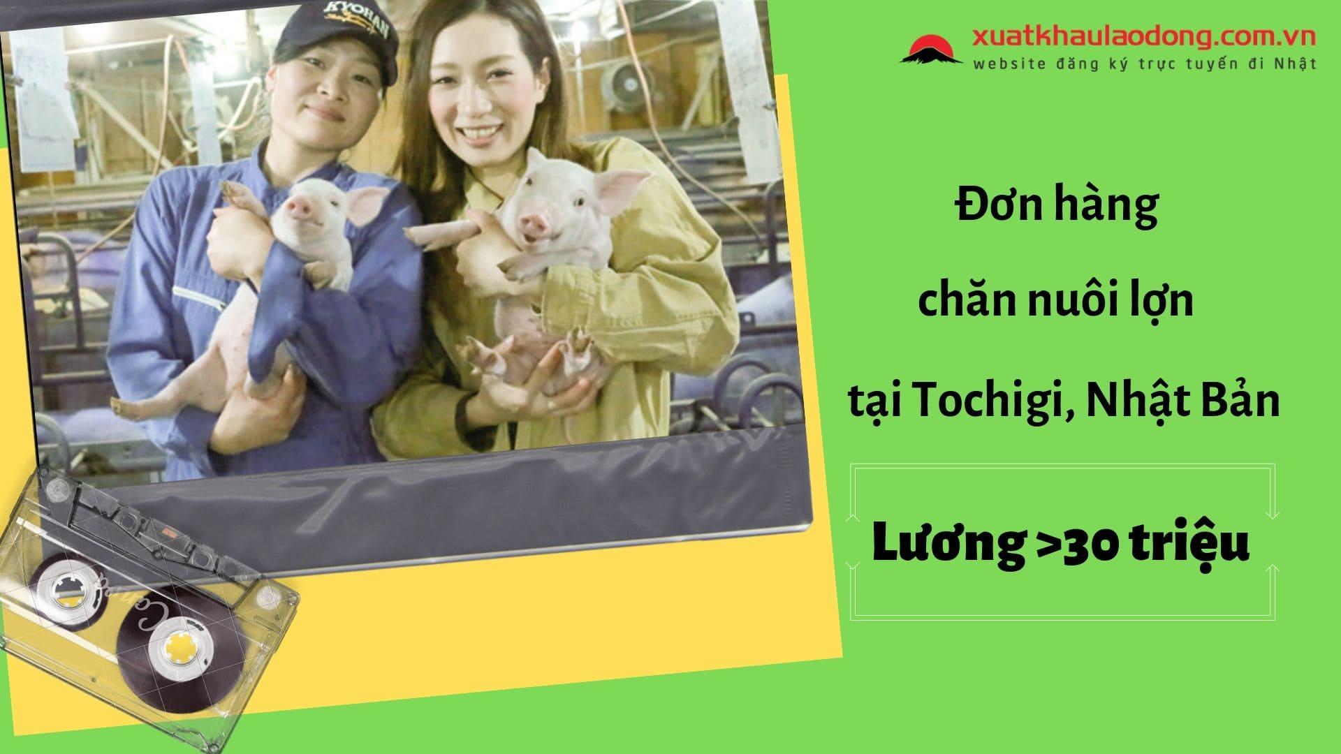Tuyển gấp 20 nam/nữ đơn hàng chăn nuôi lợn lấy đến 33 tuổi tại Tochigi, Nhật Bản