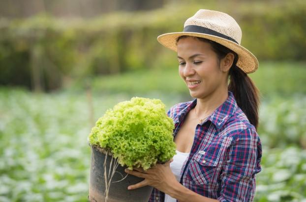 Tuyển kỹ sư nông nghiệp đi Nhật KHÔNG TIẾNG, PHÍ THẤP