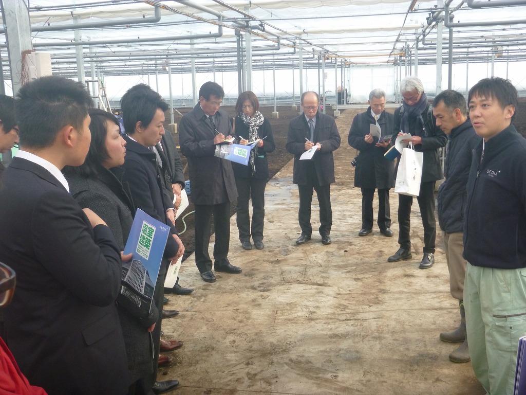 Đơn hàng thu hoạch rau lương cao tại Nagano