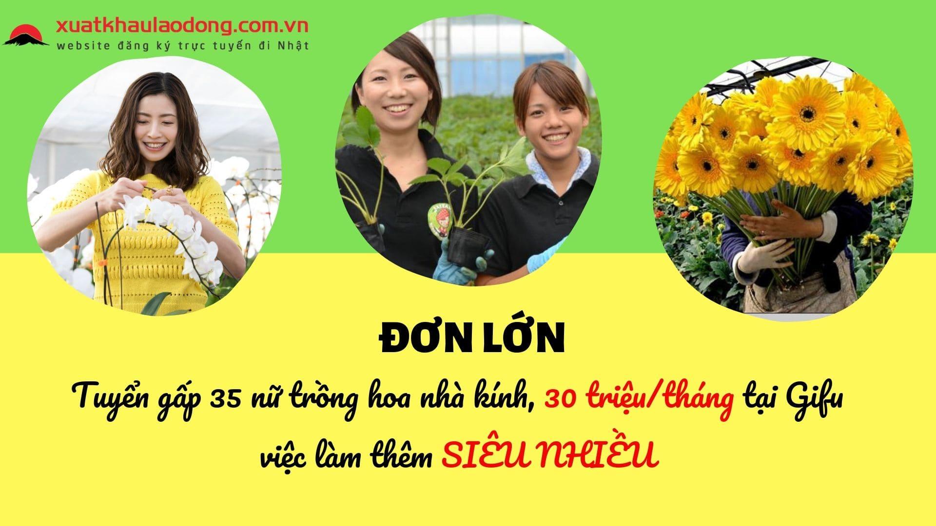 ĐƠN LỚN: Tuyển 35 nữ trồng hoa nhà kính NHIỀU VIỆC LÀM THÊM tại Gifu
