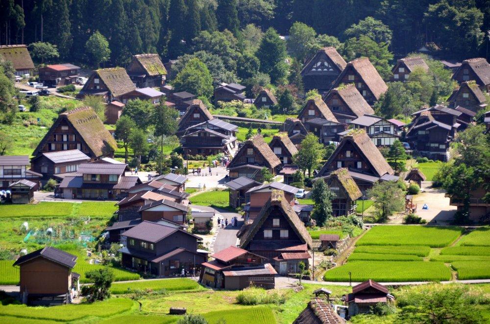 Đơn hàng trồng hoa trong nhà kính  lương cao tại Gifu