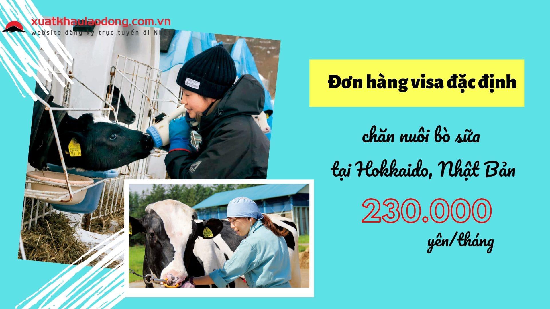 Tuyển 15 nữ đơn hàng visa đặc định chăn nuôi bò sữa LƯƠNG CAO tại Hokkaido