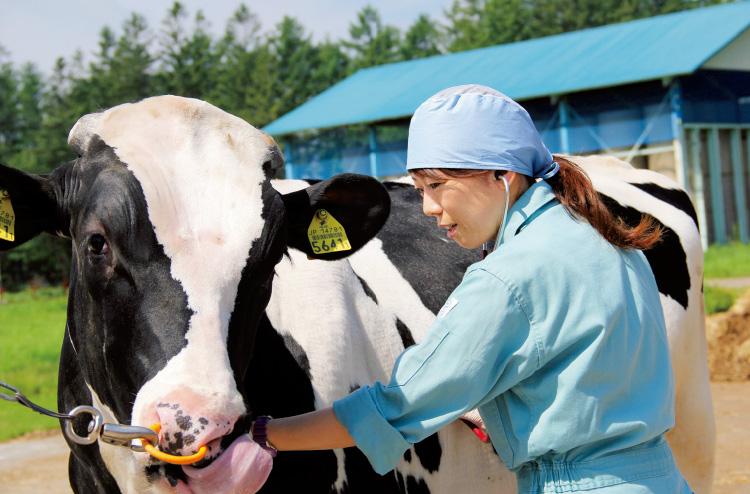 đơn hàng visa đặc định chăn nuôi bò sữa