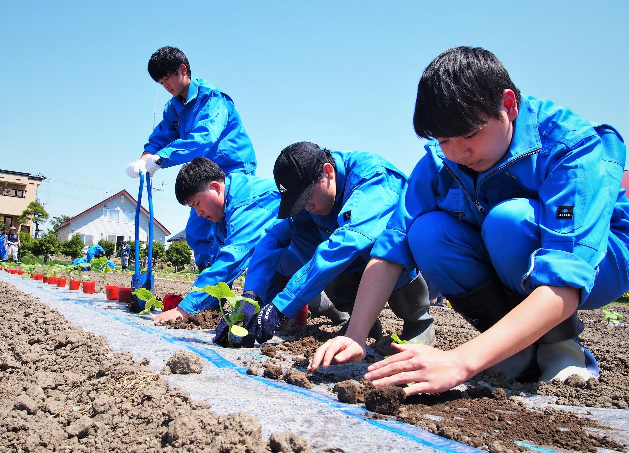 Đơn hàng thu hoạch bí đỏ PHÍ THẤP tại Kumamoto, Nhật Bản