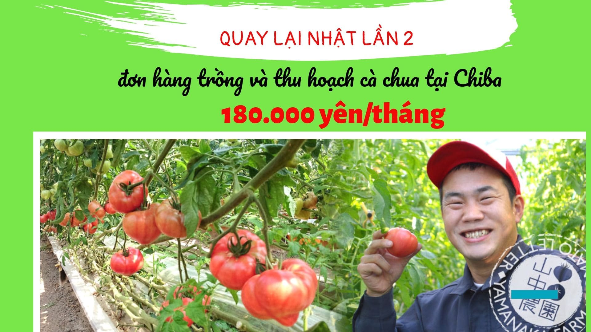 Đơn hàng trồng và thu hoạch cà chua quay lại Nhật lần 2 LƯƠNG KHỦNG, đăng ký ngay!