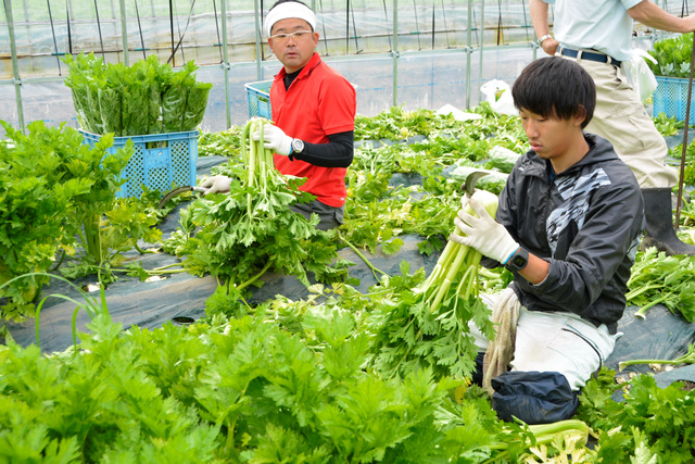 Thông báo đơn hàng trồng cà chua LƯƠNG CAO tại Ishikawa THÁNG 01/2020