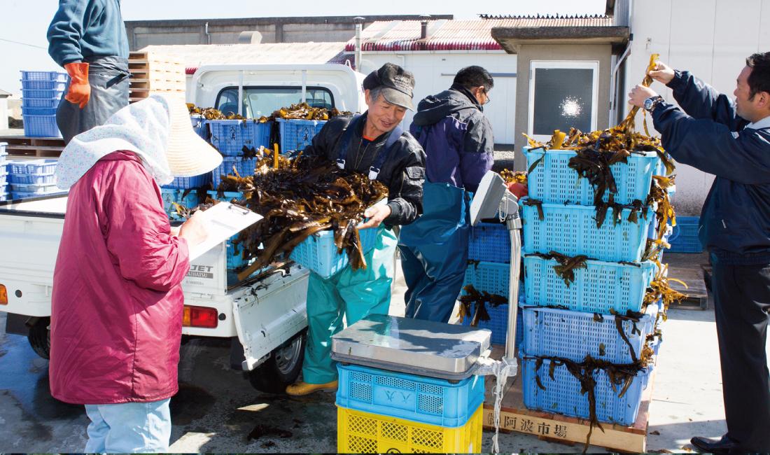 đơn hàng chế biến rong biển tại Okinawa