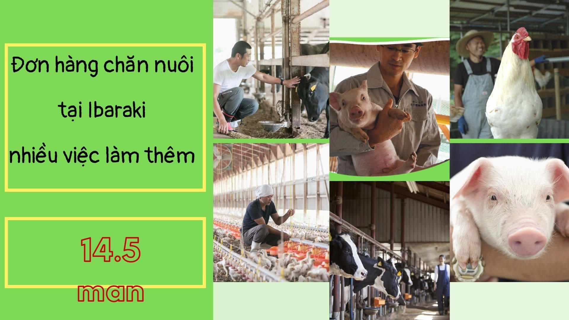 Đơn hàng nông nghiệp chăn nuôi Ibaraki rất nhiều việc làm thêm