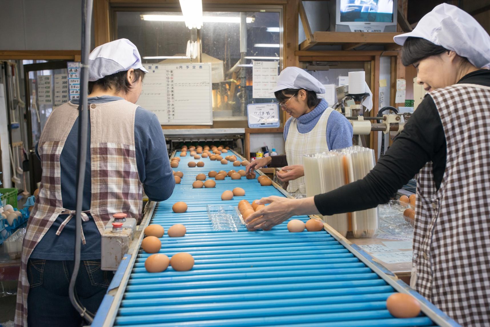 Đơn hàng nhặt trứng gà vào dây chuyền quay lại Nhật lần 2 lương cao
