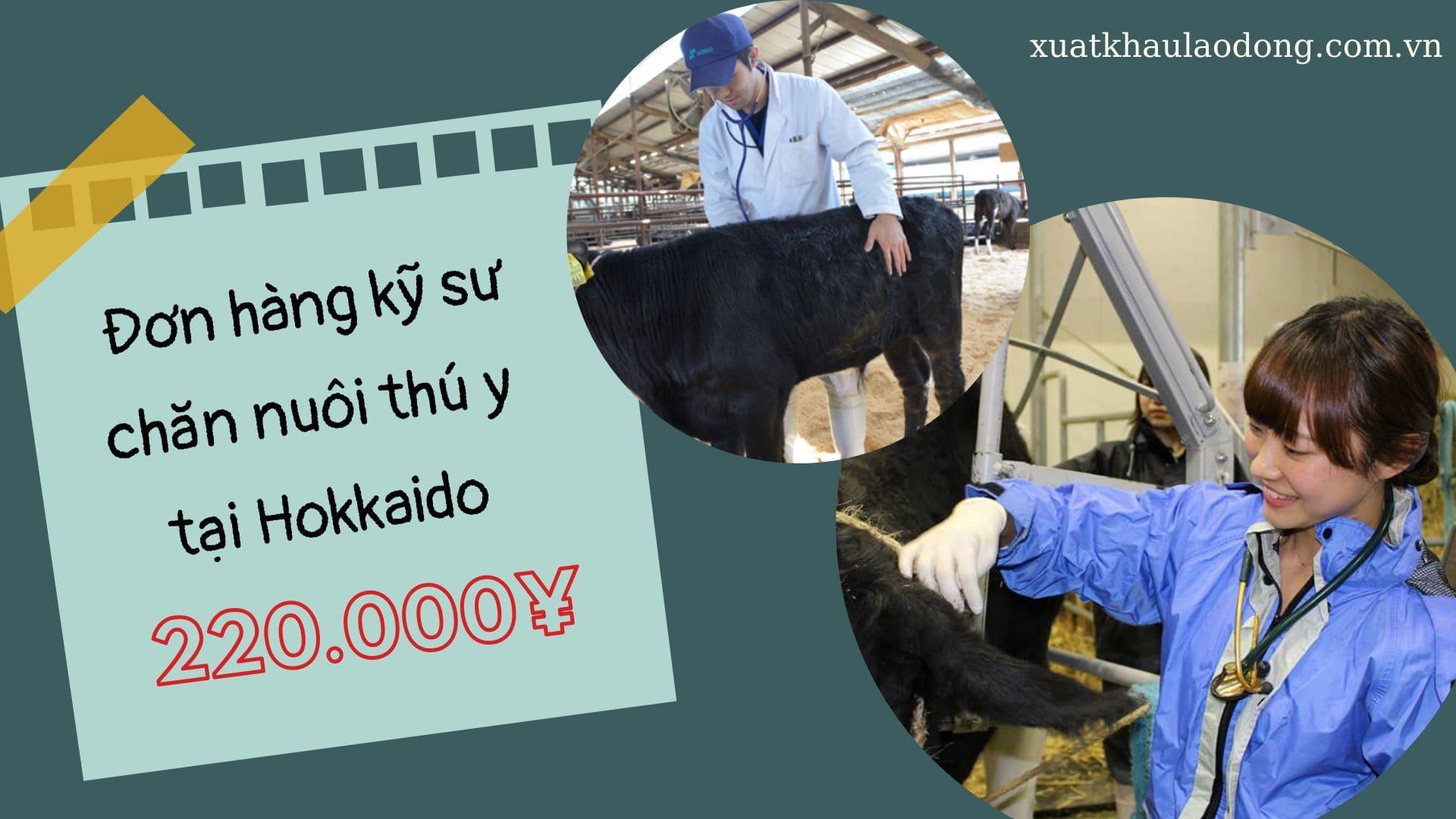 Đơn hàng kỹ sư chăn nuôi thú ý tại Hokkaido HOT NHẤT tháng 06/2020