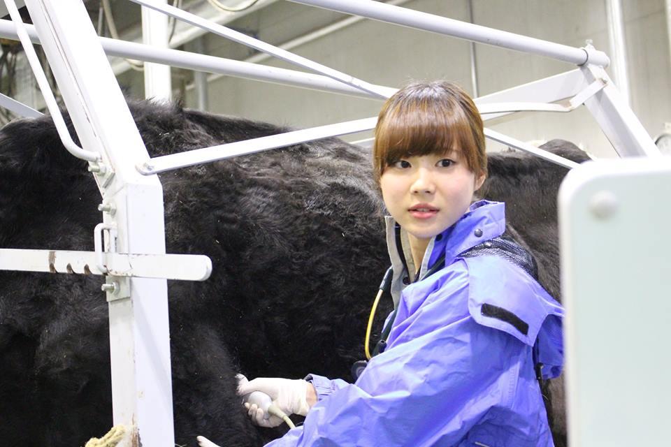 Đơn hàng kỹ sư chăn nuôi thú y đi Nhật tại Hokkaido