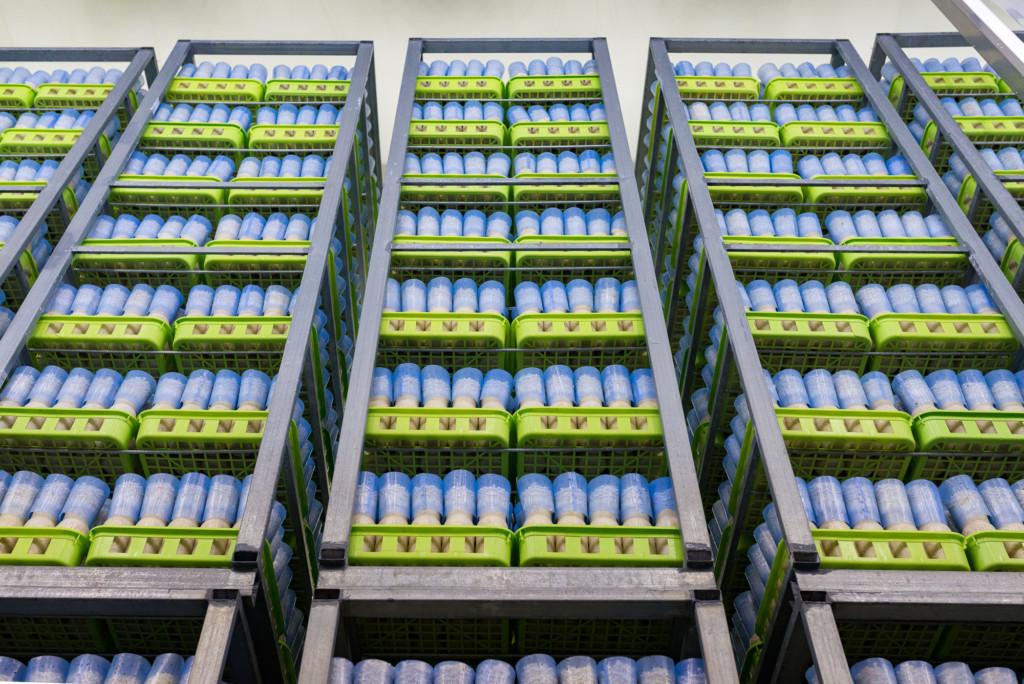 Công việc thực tế đơn hàng trồng và thu hoạch nấm tại Nhật