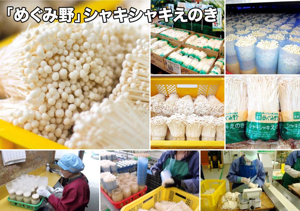 đơn hàng trồng nấm đi Nhật là làm gì?