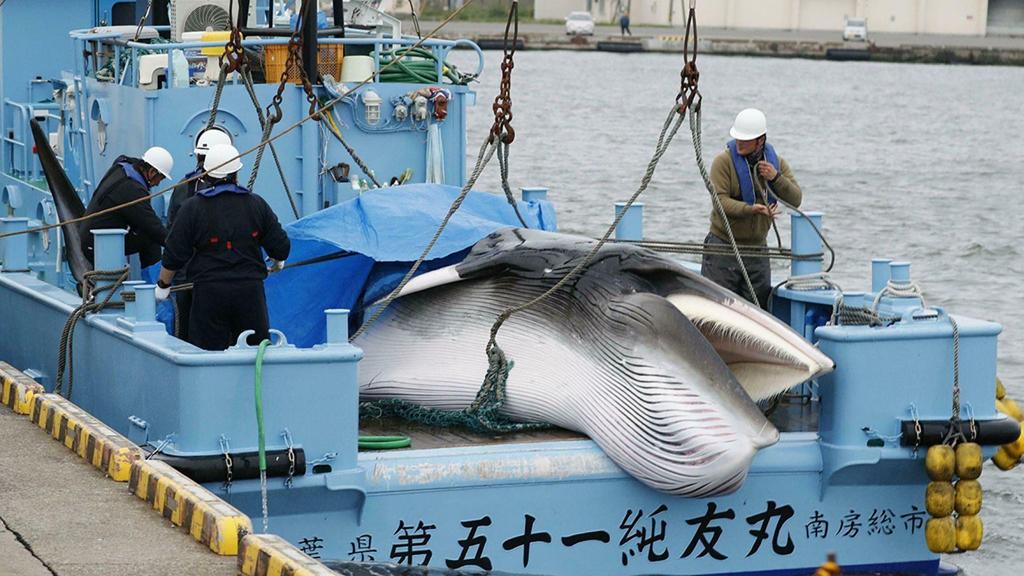 TOP đơn hàng đặc định ngành ngư nghiệp tốt nhất ở Nhật Bản