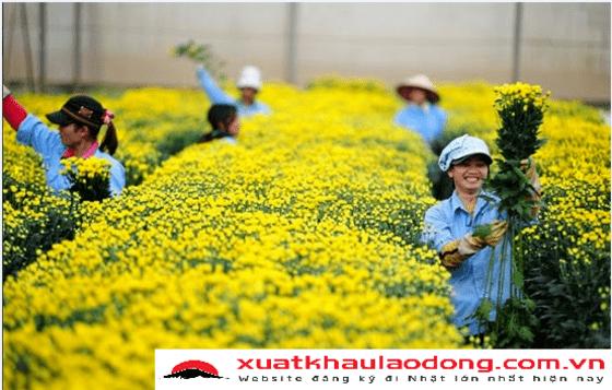 xuat-khau-lao-dong-nhat-ban-ngan-nong-nghiep