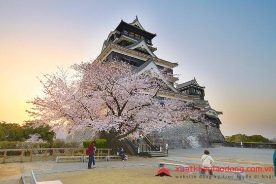 Đi XKLĐ Nhật Bản tại tỉnh Kumamoto nên chọn đơn hàng gì LƯƠNG CAO?