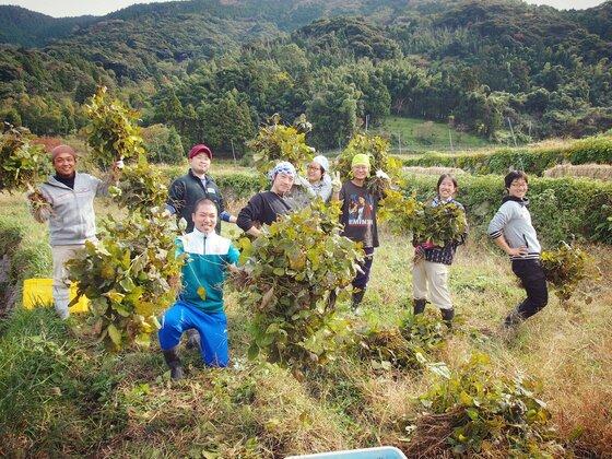 Đơn hàng thu hoạch đỗ tương tại Aichi việc nhàn, lương 31 triệu/tháng
