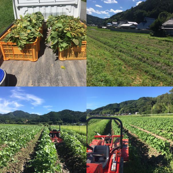 Đơn hàng thu hoạch đỗ tương tại Aichi