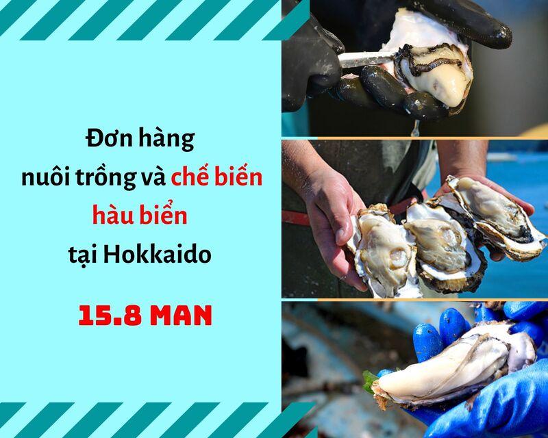 Đơn hàng chế biến hàu tại Hokkaido lương khủng 158.000 yên/tháng đang gấp