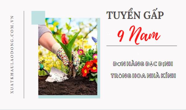 Cần 18 nữ đơn hàng đặc định trồng hoa tại Gunma, PHÍ CỰC THẤP