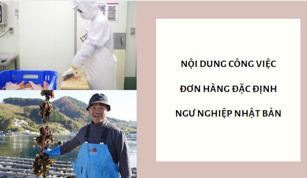 Nội dung công việc đơn hàng đặc định ngư nghiệp Nhật Bản